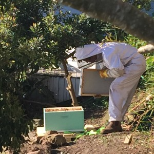 Installing the bees